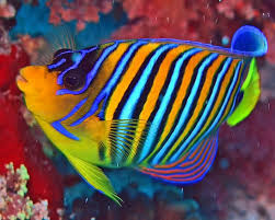 fish striped